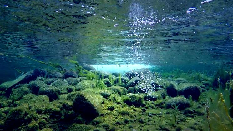 Vedenalainen kuva imetysaltaasta Virttaanmaalla. Altaan pohjassa on kiviä sekä kasvillisuutta.